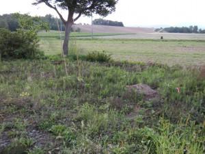 えせ積層マルチ作り前の畑
