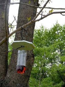 木にぶら下げたスズメバチトラップ