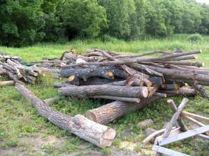 薪にする木達