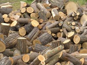玉切された木