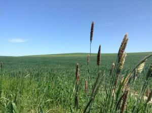 ちなみにこれは美瑛の丘で撮った一枚